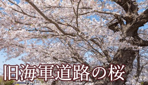 旧海軍道路の桜(阿見町)