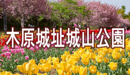 木原城址城山公園のチューリップ〜木原城と近藤氏の歴史(美浦村)