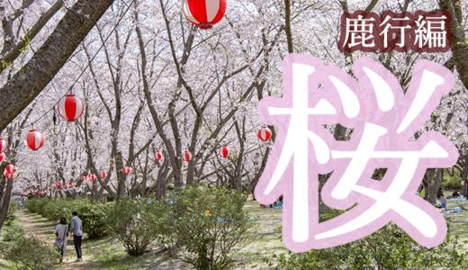 【まとめ】茨城県 鹿行地域のお花見スポット【保存版】