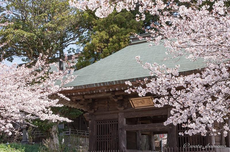 西蓮寺の山門