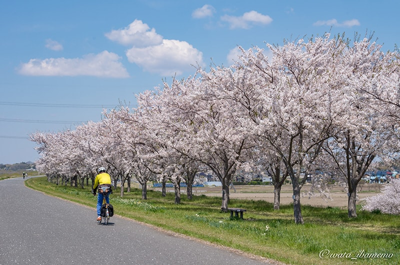 舗装された道路をサイクリング