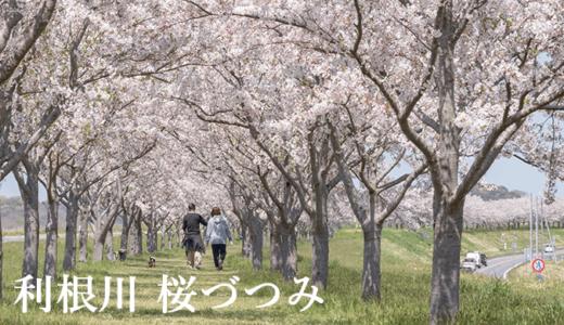 茨城の宝 利根川 桜づつみ〜アクセス・駐車場(利根町)
