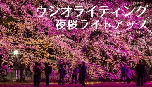 ウシオライティングの夜桜ライトアップ(つくば市)