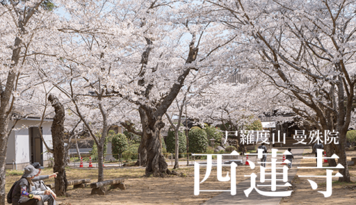 尸羅度山 曼殊院 西蓮寺〜桜・イチョウ・文化財(行方市)