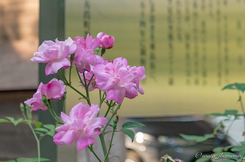境内には豊富な花々