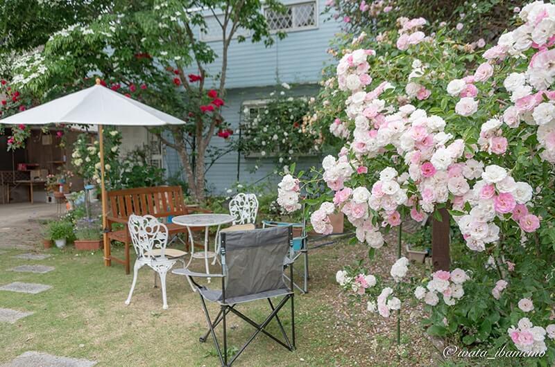 加倉井宅のバラ