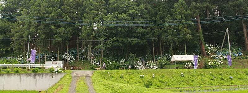 竹原神社のあじさい