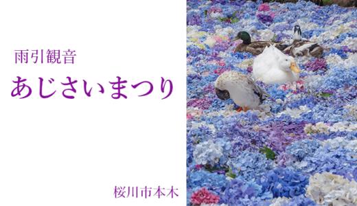 雨引観音のあじさいまつり〜話題の水中花(桜川市)