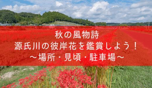 源氏川の彼岸花〜見頃・場所・駐車場情報(常陸太田市)