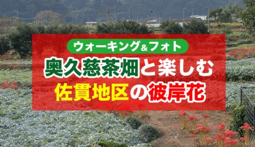 【ウォーキング&フォト】花室神社のすぐ近く 佐貫地区の彼岸花(大子町)【1時間5,000歩】
