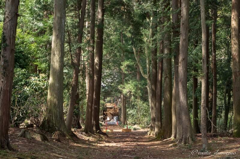 杉林の参道