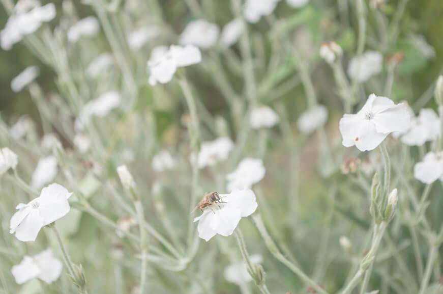 園内には約200種類の草花