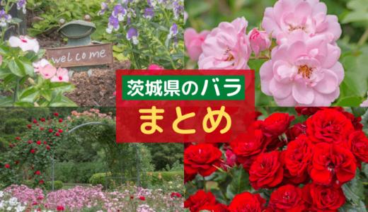 【茨城県の花】バラを楽しめるスポット4選!【まとめ】