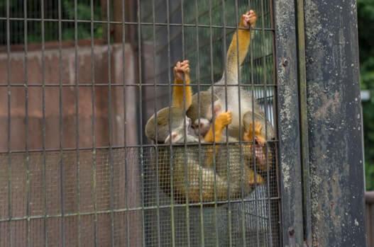 ふれあい動物園のお猿さん