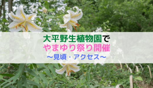 【見頃は7月上旬〜中旬】大平野生植物園のやまゆり祭り(利根町)