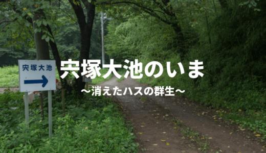 宍塚大池の消えたハスの群生をレポート(土浦市)