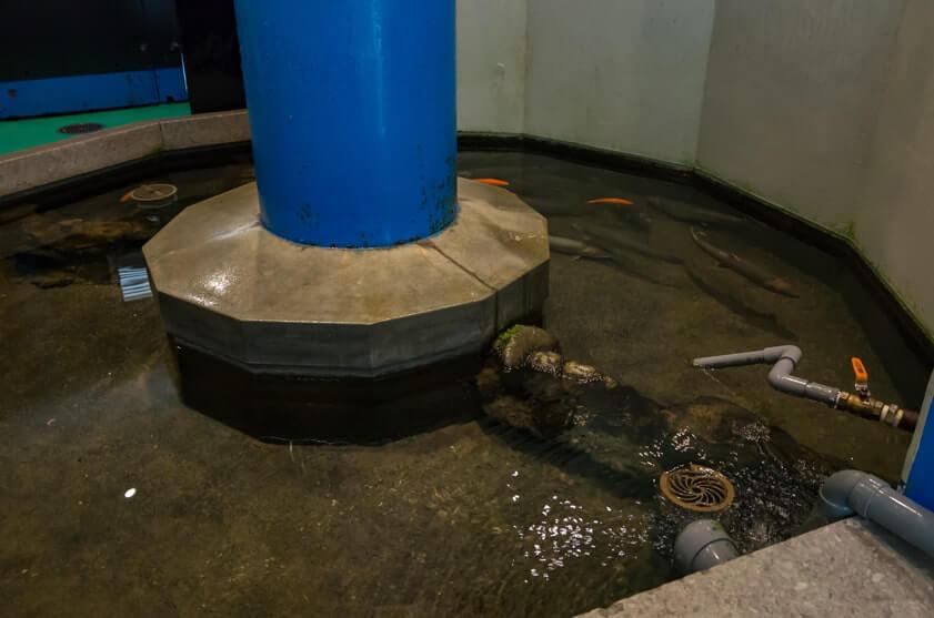 タッチ水槽