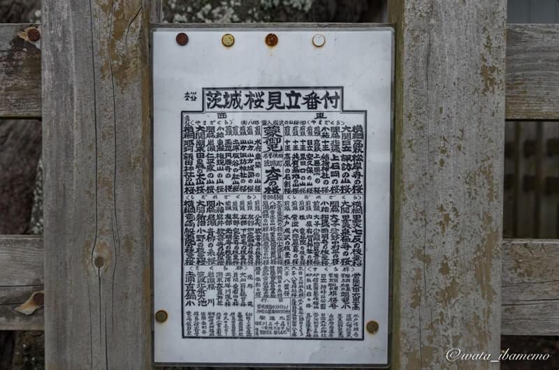 昭和の茨城県桜番付