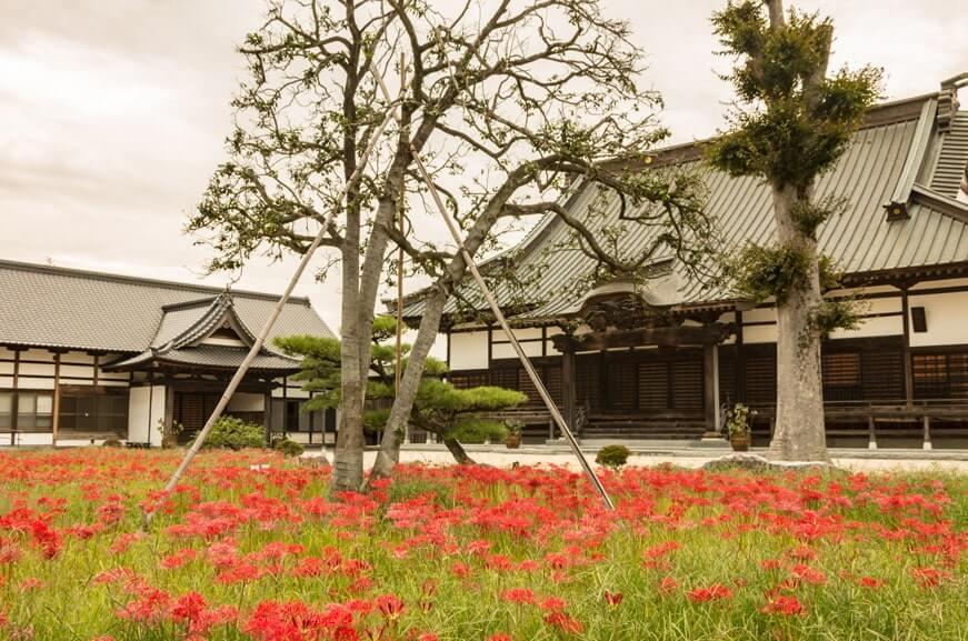 千妙寺の彼岸花