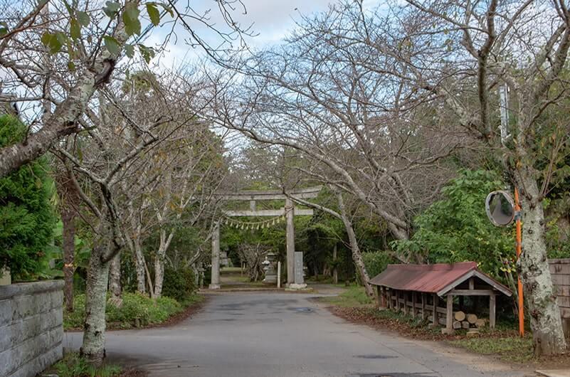 桜並木と二の鳥居