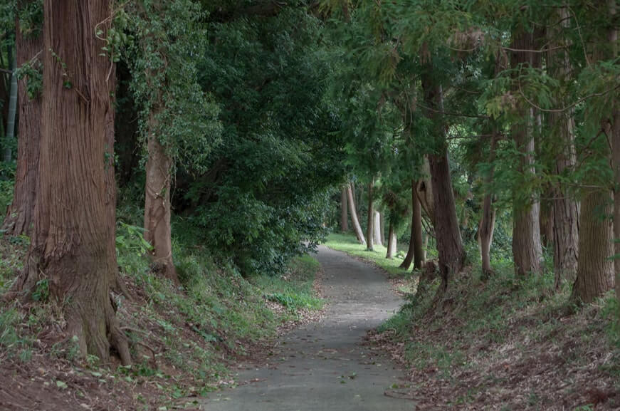 楯縫神社(信太)の参道
