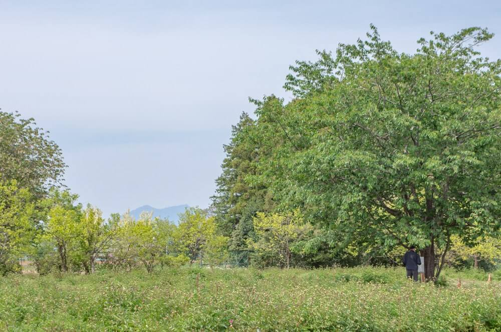 芍薬畑から見る筑波山
