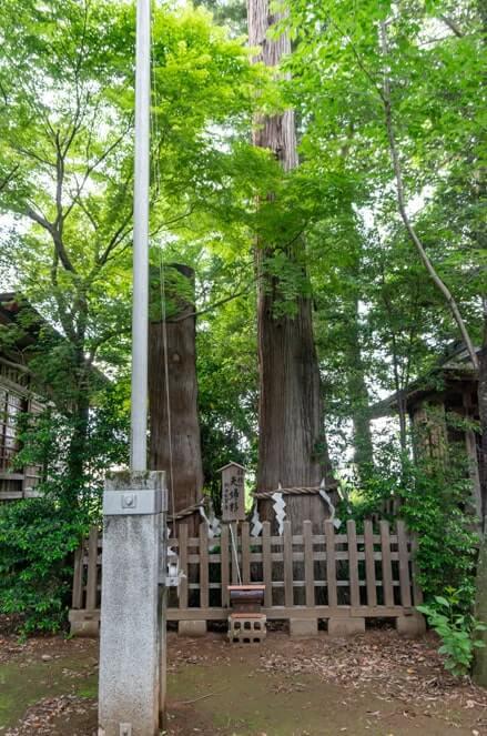 夫婦杉(樹齢700年)