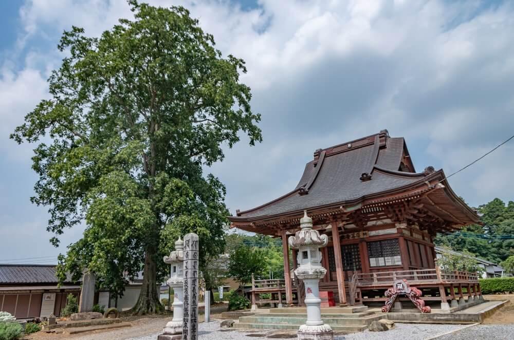 観音堂隣の巨木