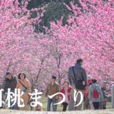 【2019年版】日本一の古河桃まつり(古河市)