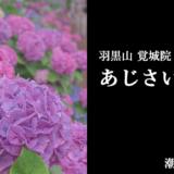 羽黒山 二本松寺のあじさいの杜(潮来市)