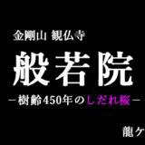 般若院のしだれ桜(龍ケ崎市)